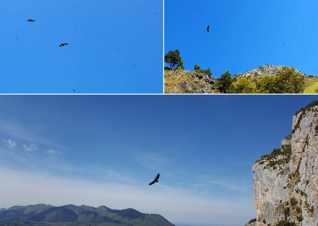 Falaises aux vautours - Randonnée Vallée d'Ossau