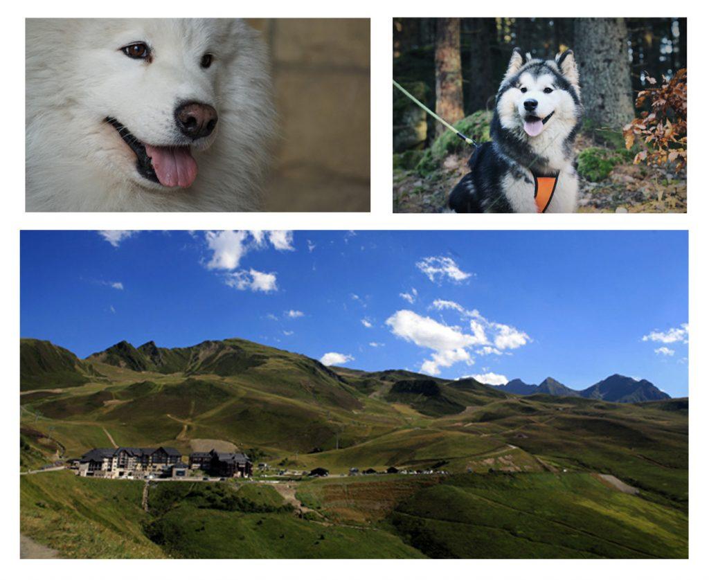 Canirando - Balade en chiens de traineaux à Peyragudes - Activités famille